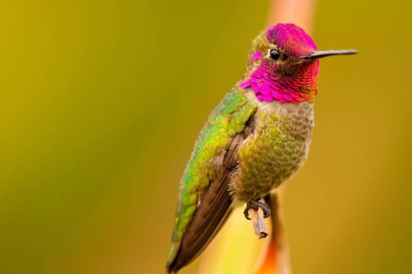 绿色和粉红色的鸟栖息在干特写摄影高清壁纸