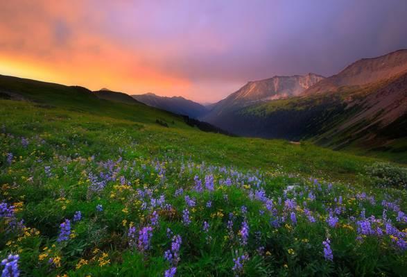 鲜花,早上,山,景观,性质