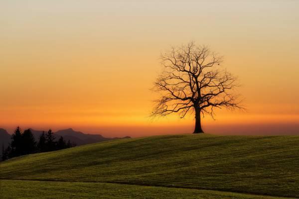 光秃秃的树下橙色的天空高清壁纸