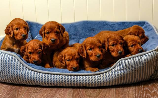 房子,狗,小狗