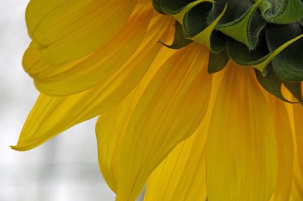 黄色群花高清壁纸