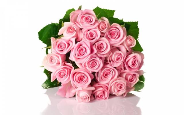 反射,玫瑰,芽