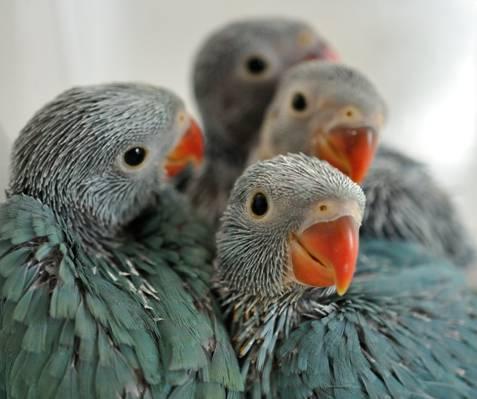 鸟小鸡选择性焦点照片高清壁纸