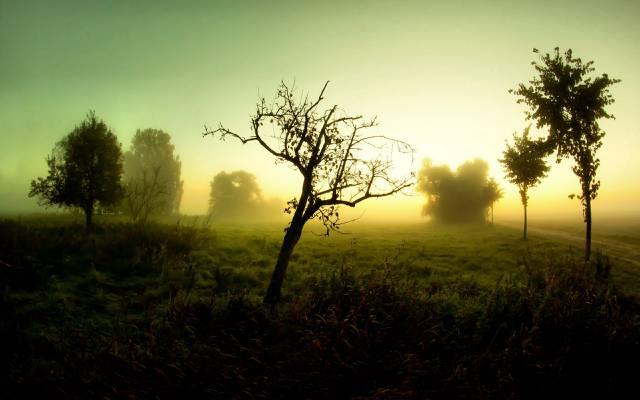 雾,早上,景观,道路,树木