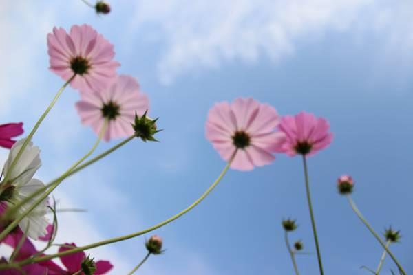 虫在白天粉红色的花朵,萨加城市高清壁纸的眼睛视图