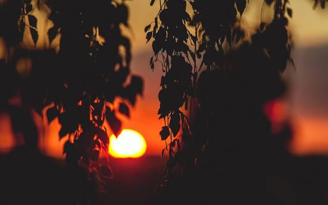 叶子,心情,太阳,树枝,风景,日落