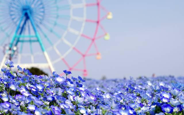 夏天,鲜花,背景