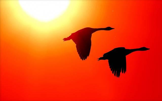发光,鸟,剪影,翅膀,太阳
