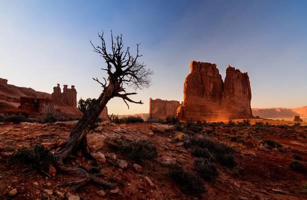 峡谷,性质,沙漠,犹他州,树,拱门国家公园,拱门国家公园,岩石,美国