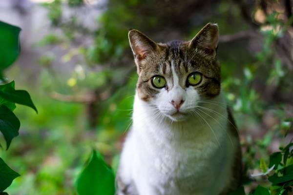 选择性焦点银虎斑猫周围的绿叶植物高清壁纸
