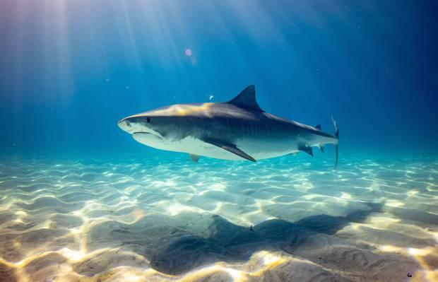 深海里的鲨鱼