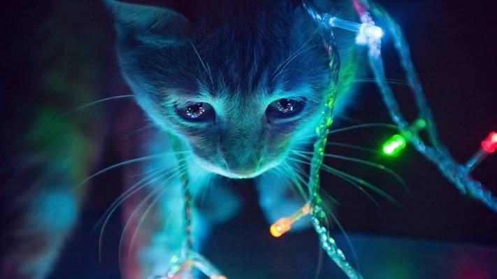 壁纸灯,花环,小猫