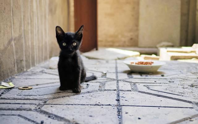 凯蒂,背景,小猫,看,猫