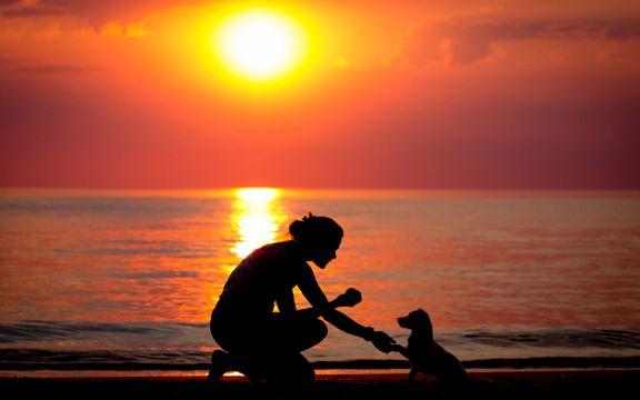 夕阳下的主人与狗狗