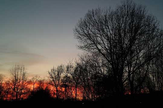 夕照丛林图片
