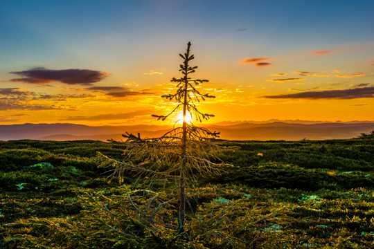 冉冉升起的太阳图片