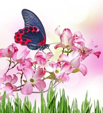 花朵上的蝴蝶图片