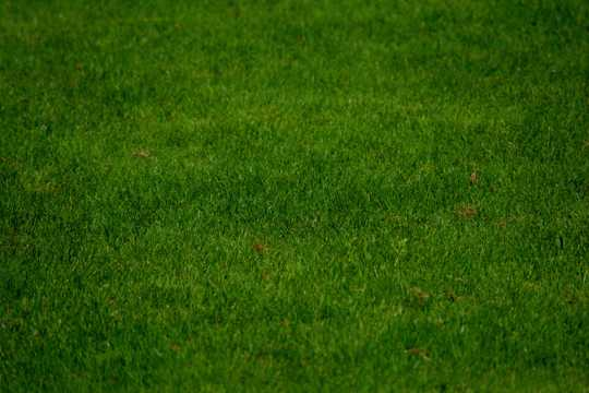 绿色草甸图片