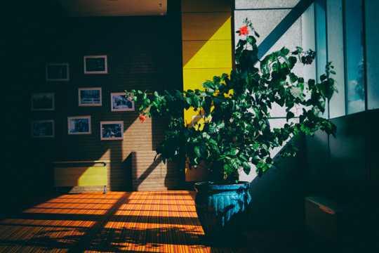 艳阳照射房子的图片