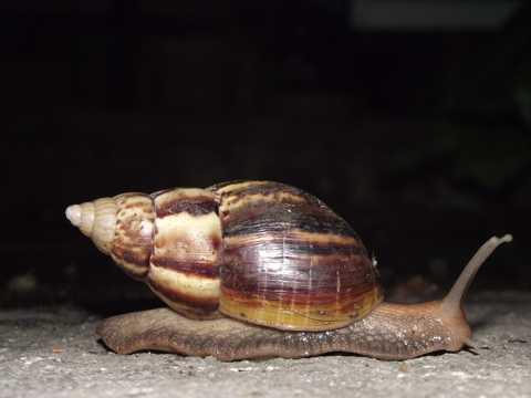 爬行的蜗牛高清图片