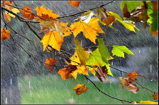 秋日的雨图片