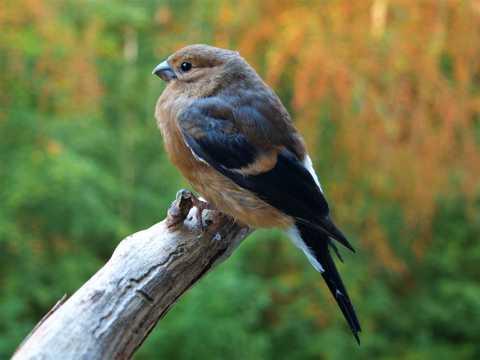 雀鸟休憩图片