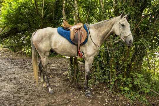 白色马儿图片