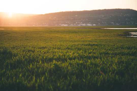 早晨绿色原野图片