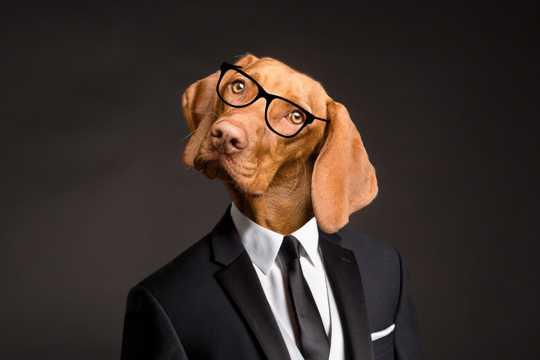 小狗个性证件照图片