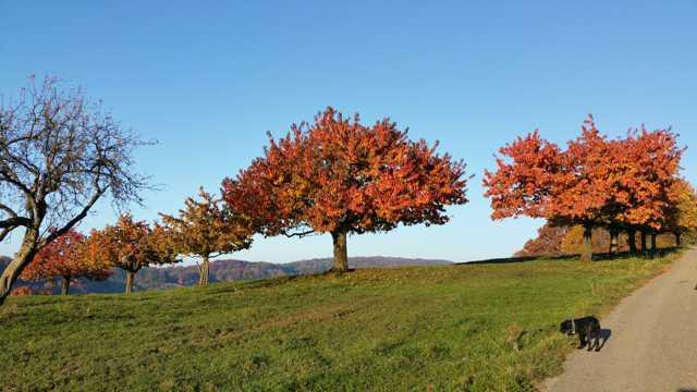 秋季红树木景色图片