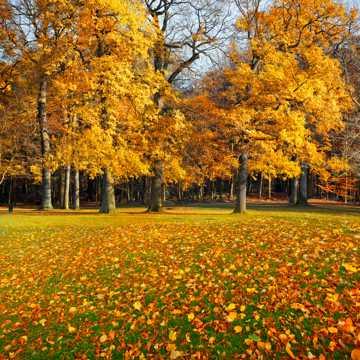 秋日丛林图片
