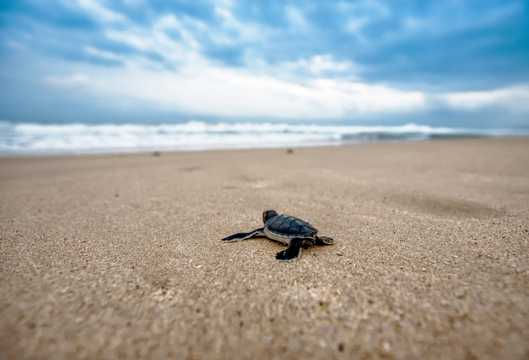 海滩上乌龟图片