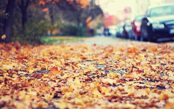 秋季落叶景色图片