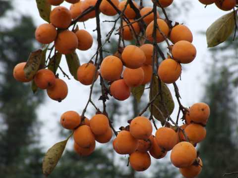 秋日的水果图片