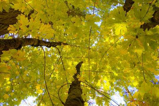 秋季树木枯叶俯视图片