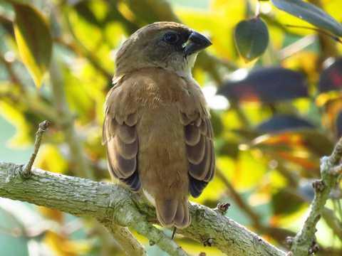枝头幼鸟图片