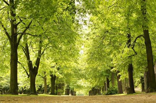 公园绿色树木图片