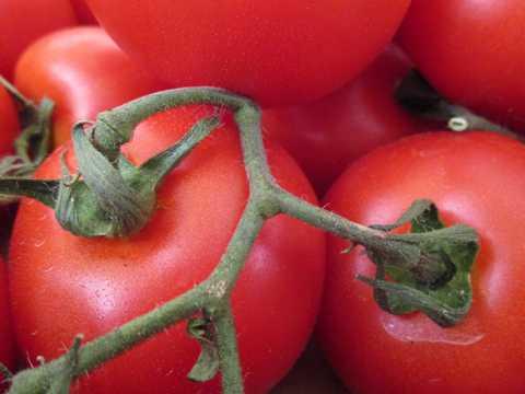新鲜嫣红的西红柿图片