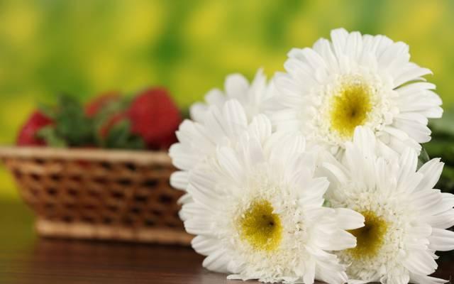 鲜花,宏,篮,黛西,草莓,领域