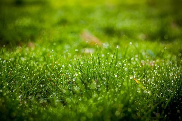 草与露水高清壁纸