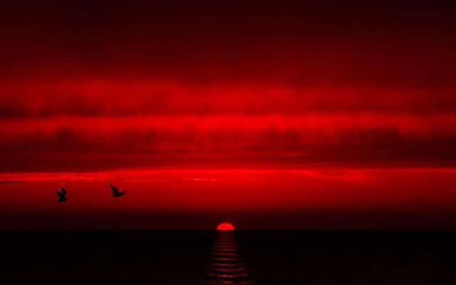 海,鸟,天空,云,日落