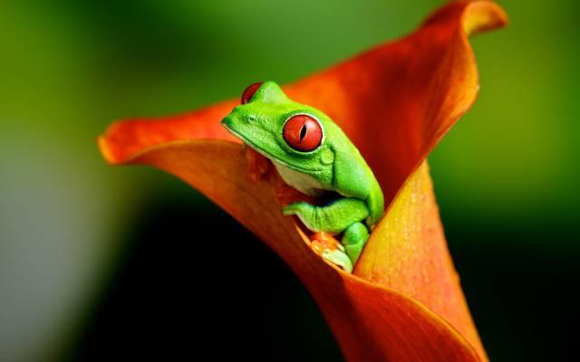 青蛙,花,性质