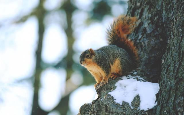 树,动物,蛋白质,雪