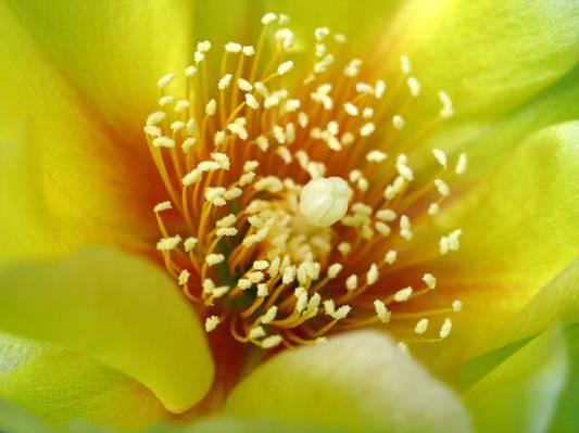 黄色花瓣特写镜头照片开花HD墙纸