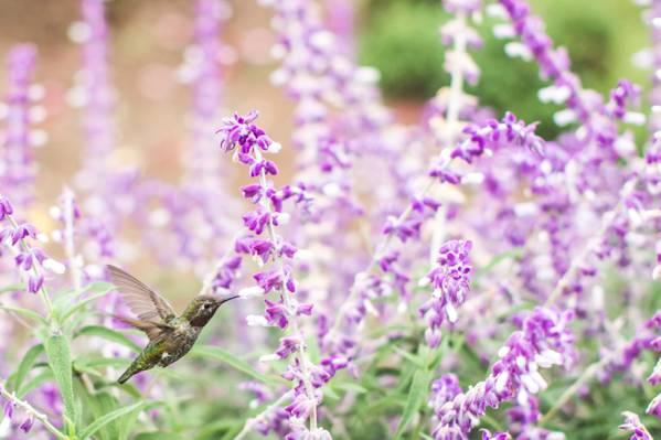 哼唱着鸟紫色花瓣高清壁纸附近的选择性焦点摄影