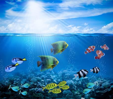 光线,水下,珊瑚,气泡,珊瑚礁,海洋,鱼,鱼,海底世界,热带,太阳,礁