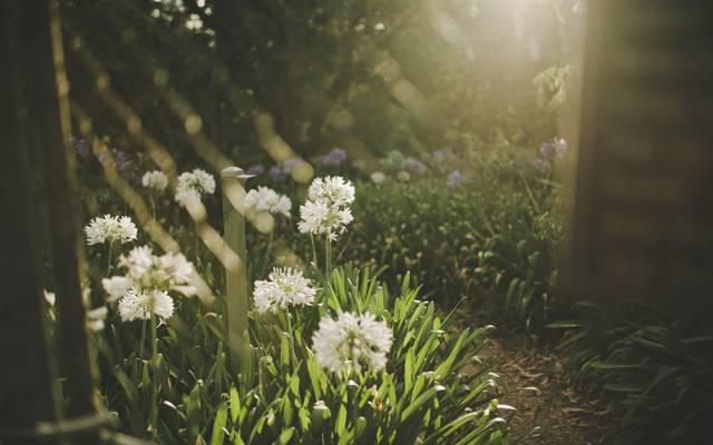 花,草,白色