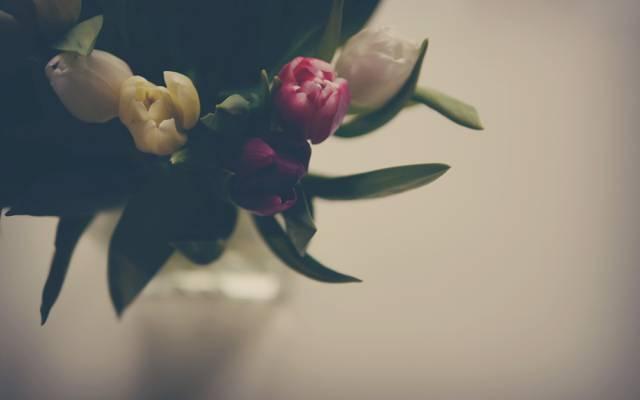 鲜花,郁金香,叶子