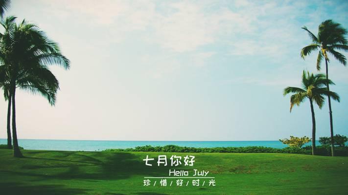 在清新的海边遇见7月