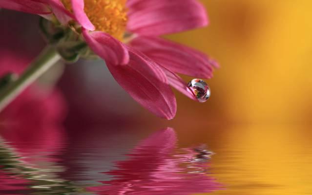 水滴,宏,水,下降,性质,花卉